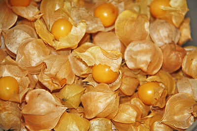 Ground Cherry Seeds - *Decorative* - Easy to Dry - theseedhouse - 30 Seeds