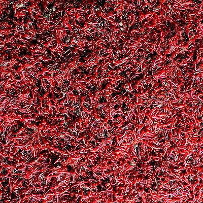 Small Size Bloodworm (Sealed Plastic Bags) - Perfect Live Fish Food