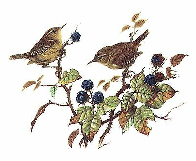 "3 Wren Bird Pair 2-3/8"" X 2-7/8"" Waterslide Ceramic Decals Bx"