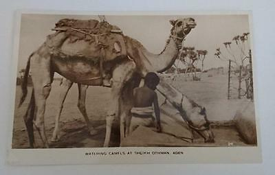 Vintage post card Postcard - Watering Camels , Aden , Yemen ,  Middle East