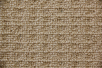 Cheap Wool Carpet Roll Biscuit (Beige) Colour 19$ SQM Ideal for Rental Property