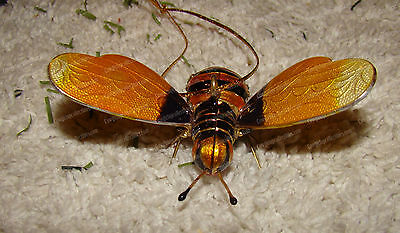Baked Enamel, Bejeweled Hand Crafted Bee (Kubla Craft, 4764) Hanging Ornament