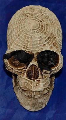 Nemesis Now Arachnid GOTHIC SPIDER WEB HUMAN SKULL FIGURE Magic Wiccan Pagan