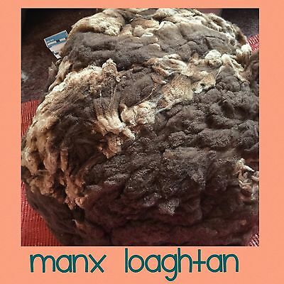 MANX LOAGHTAN Rare British Breed WHOLE Fleece RAW