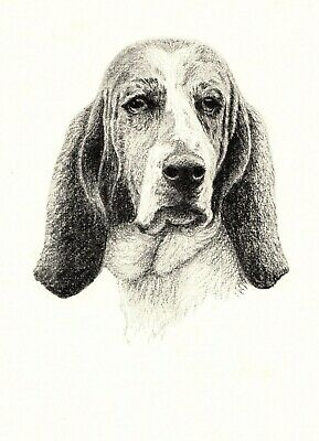 1935 Antique BASSET HOUND Dog Print Gallery Wall Art Gift for Dog Lover CFW 1724