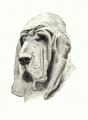 1935 Antique BLOODHOUND Dog Print Gallery Wall Art Gift for Dog Lover CFW 1726