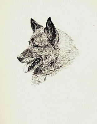 1935 Antique ELKHOUND Print Dog Gallery Wall Art Gift for Dog Lover CFW 1731