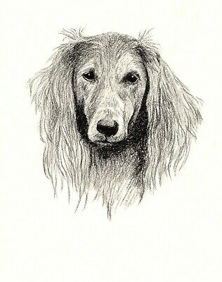 1935 Antique SALUKI Dog Print Gallery Wall Art Gift for Dog Lover CFW 1737