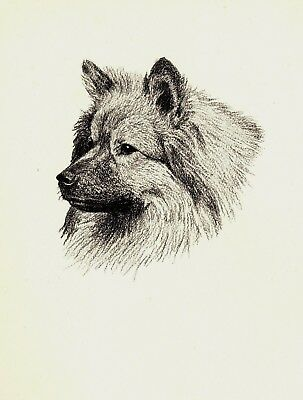 1935 Antique KEESHOND Dog Print Gallery Wall Art Gift for Dog Lover CFW 1812