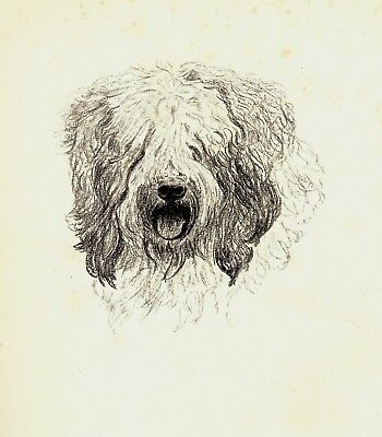 1935 OLD ENGLISH SHEEPDOG Dog Print Gallery Wall Art Gift for Dog Lover CFW 1815