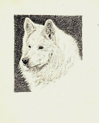 1935 Antique SAMOYED Dog Print Gallery Wall Art Gift for Dog Lover CFW 1819