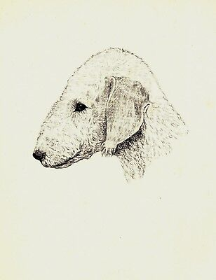 1935 Antique BEDLINGTON Terrier Dog Print Gallery Wall Dog Lover Gift CFW 1826