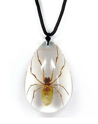 Clear Lucite Teardrop Nylon Cord Necklace with REAL Brown Recluse Spider