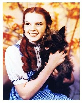JUDY GARLAND and TOTO color promo still THE WIZARD OF OZ - (g478)