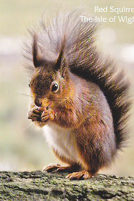 Postcard The Red Squirrel, The Isle Of Wight / Iow / Iw