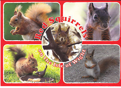 Postcard The Red Squirrels, The Isle Of Wight / Iow / Iw