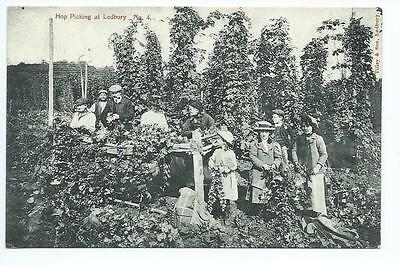 "Herefordshire printed view by Tilley ""Hop   Picking at Ledbury No 4"""