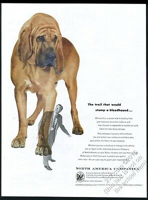 1953 Bloodhound color photo North American insurance vintage print ad