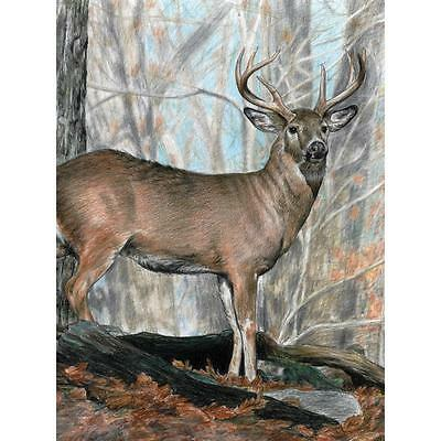 """Colour Pencil By Number Kit  WHITETAIL BUCK Deer 9"""" X 12"""""""