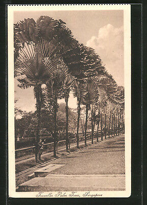 tolle AK Singapore, Traveller Palm Trees
