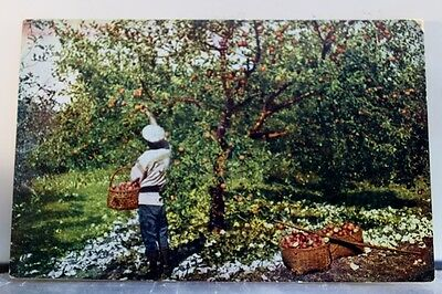 Scenic Apple Tree Postcard Old Vintage Card View Standard Souvenir Postal Post