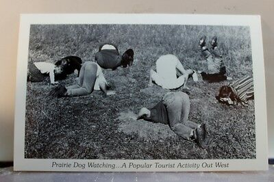 Scenic Prairie Dog Watching Postcard Old Vintage Card View Standard Souvenir PC