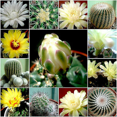 Cactus Seed Mixture - 100 Seeds