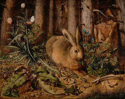 A Hare in the Forest Hans Hoffmann Hase Wald Tiere Natur Löwenzahn B A3 02198