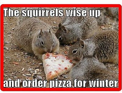 Funny Squirrel Winter Pizza  Refrigerator / Tool Box Magnet Gift Card Insert
