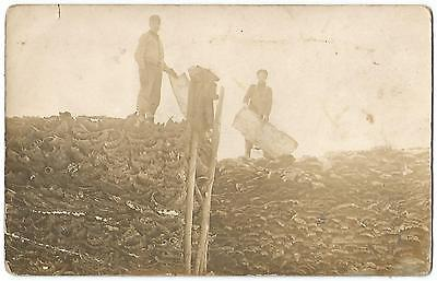Ogema Wisconsin WIS WI (Price County) Stacking Bark Wood RPPC Real Photo 1911