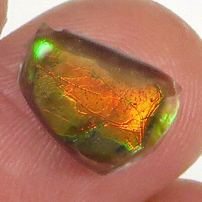 1.3CT Natural Canadian Ammonite Ammolite Fossil Cab Ready For Setting MSJA198