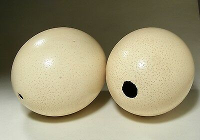 Two Vintage Ostritch Eggs