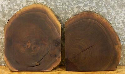 2-Reclaimed Partial Live Edge Round Cut Black Walnut Taxidermy Bases 12120-12121