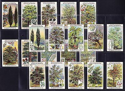Gallaher WOODLAND TREES SERIES 1912 Complete Set Of 100 *Good/VG Condition*