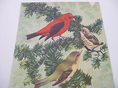 "Vintage 1930's/40's Lithograph ""Tanager Father w/His Young"" by Jacob Bates"