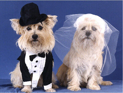 Pet Note cards Dog Cairn Terrier Wedding Couple