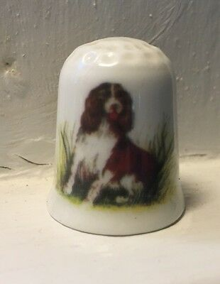 Coalport Bone China Thimble English Springer Spaniel Dog