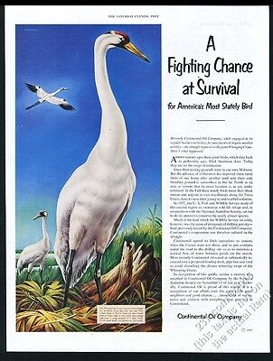 1952 Whooping Crane great color art Conoco oil vintage print ad