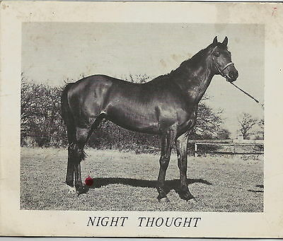 Night Thought Racehorse At Stud Card 1960's Horse Racing