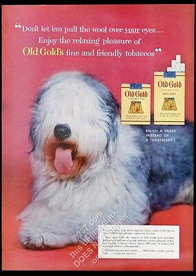 1954 Old English Sheepdog photo Old Gold cigarette vintage print ad