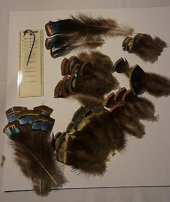 Ocellated Turkey Feathers  Salmon  Fly Tying Native American Crafts