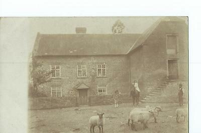 Herefordshire RP of sheep beside a farmhouse, believed to be at Orcop