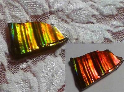 Color Change Red to Green Stripes AMMOLITE Gemstone Rough 23x16mm