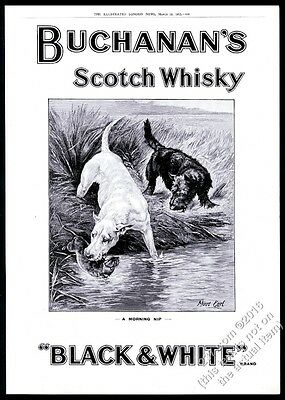 1912 Pit Bull Scottish Terrier by Maud Earl Black & White Scotch whisky print ad