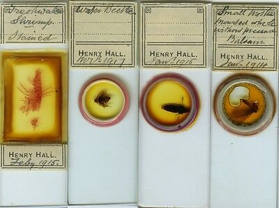 4 Insect Microscope Slides by Henry Hall