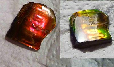 A+ Color Change Red to Green AMMOLITE Gemstone Rough 25x20mm 25cts!