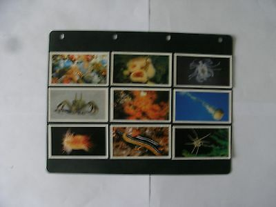 Full Set x 30 Grandee Cards. The Living Ocean.  1988.