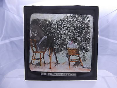 Antique Glass Magic Lantern Coloured Slide # Dog Photographing A Cat