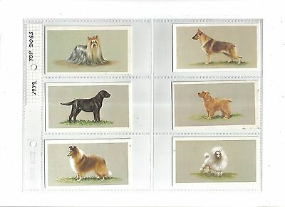 Top Dogs Collection.Issued by Players(Grandee) 1979.Full set of 25 in sleeves