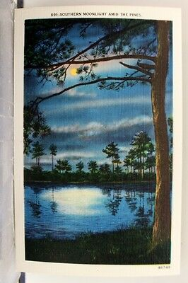 Scenic Southern Moonlight Pines Postcard Old Vintage Card View Standard Souvenir